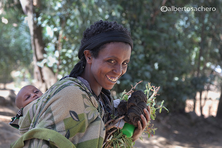 In the Ethiopia's highlands