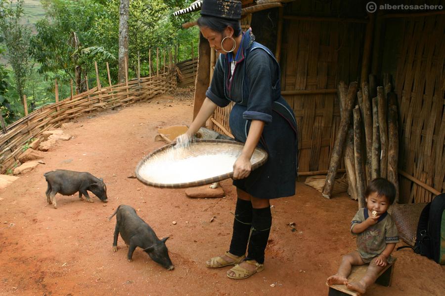 9.Vietnam-donna-e-riso