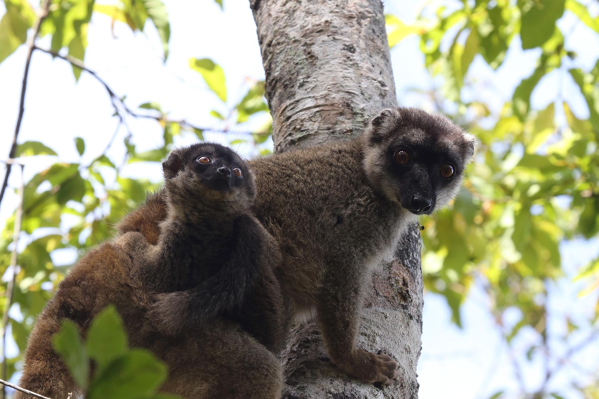 I LEMURI NEL MADAGASCAR