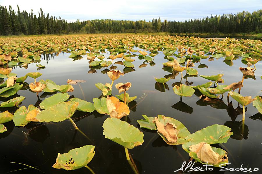 Yukon_48