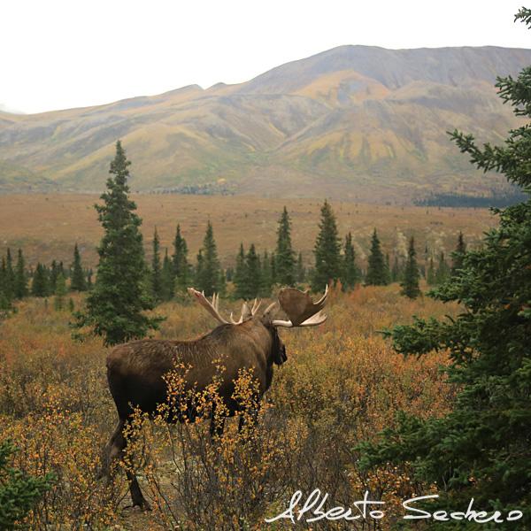 Yukon_55